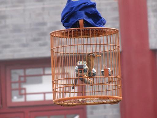 Oiseau qui écoute